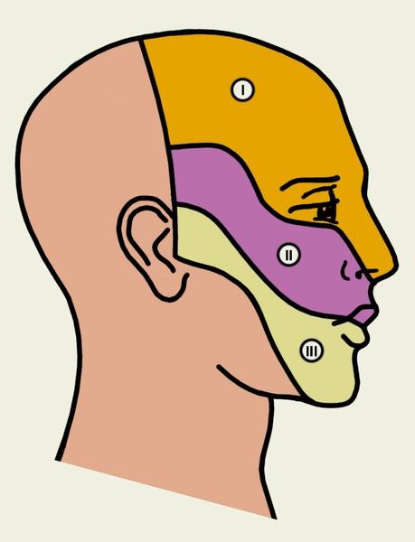 Черепные нервы(nervi craniales; синоним черепно-мозговые нервы) нервы, отходящие от головного мозга или входящие в...